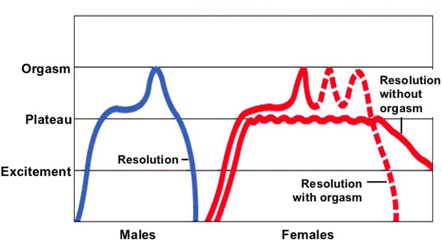 چرخه عملکرد جنسی