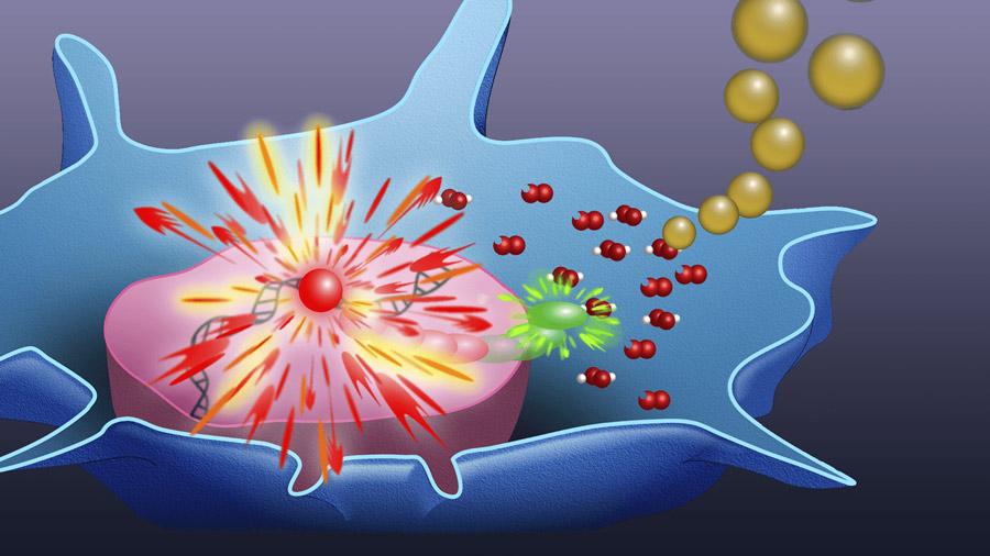 سطح آنتی اکسیدانها در رژیم غذایی